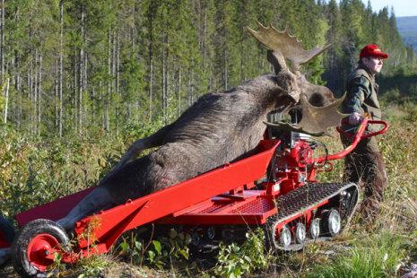 JärnHästen med älgvagn